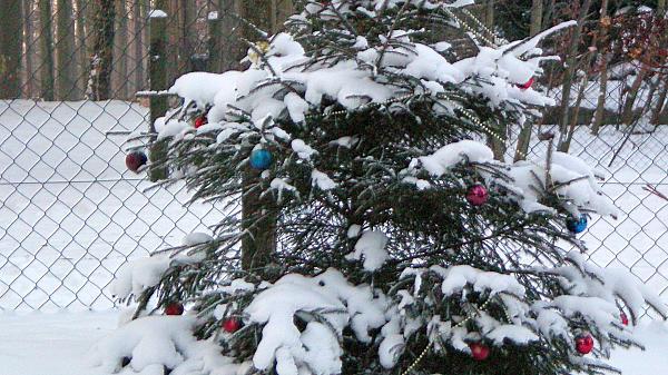 Weihnachten Tierpark Nikaolaus 021
